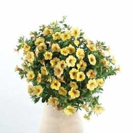 Калибрахоа Celebration® 'Sun Yellow'