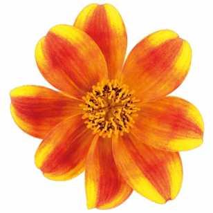 Череда Beedance® Painted Yellow