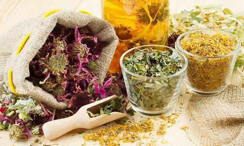 Сбор и заготовка растений