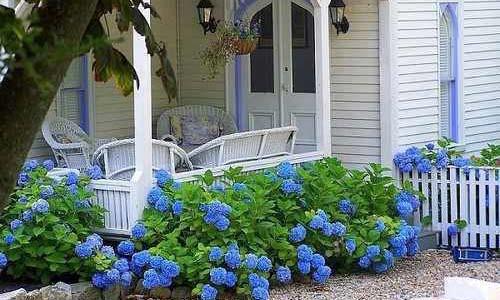 Белая веранда и голубые гортензии