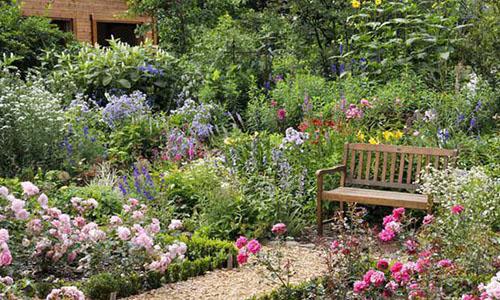 Розы: душистая зона отдыха