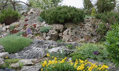 Американский альпийский сад