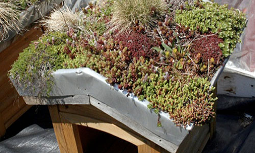 Будка-сад на крыше