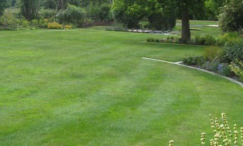 Газон травяной