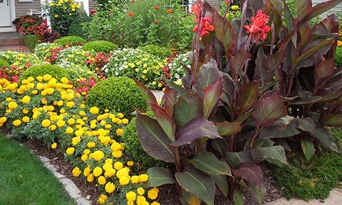 Фокусные растения