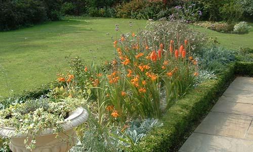 Фоновые растения