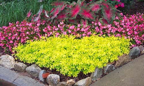 Обрамляющие растения
