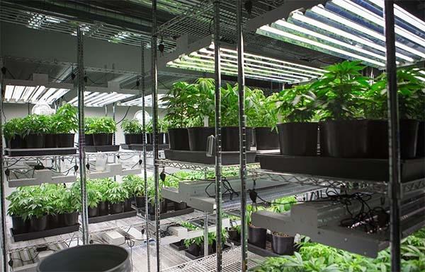 Помещение для растений